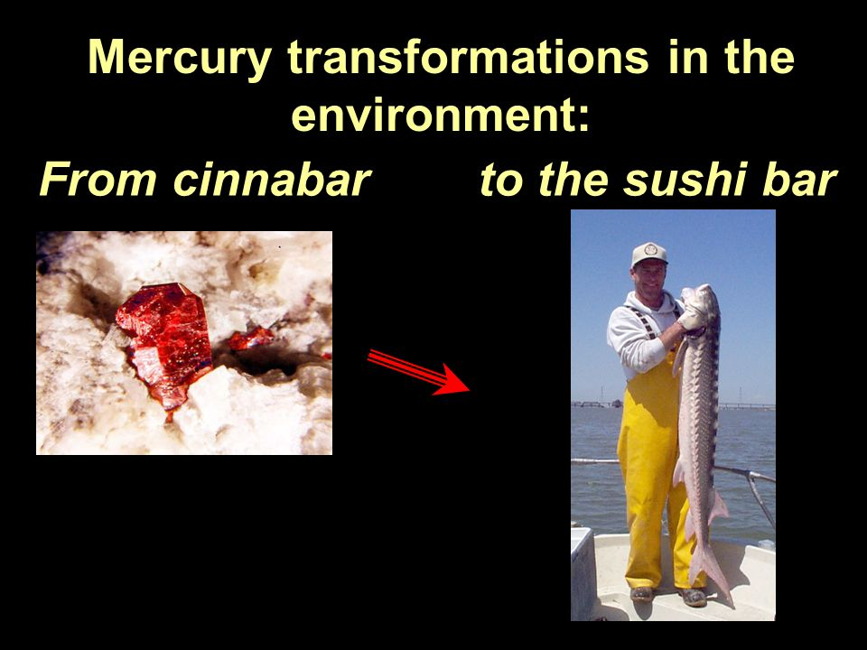 Mercury transformations in the environment: