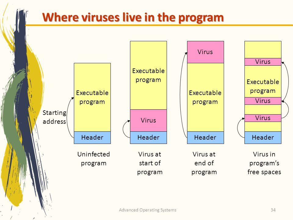 Where viruses live in the program