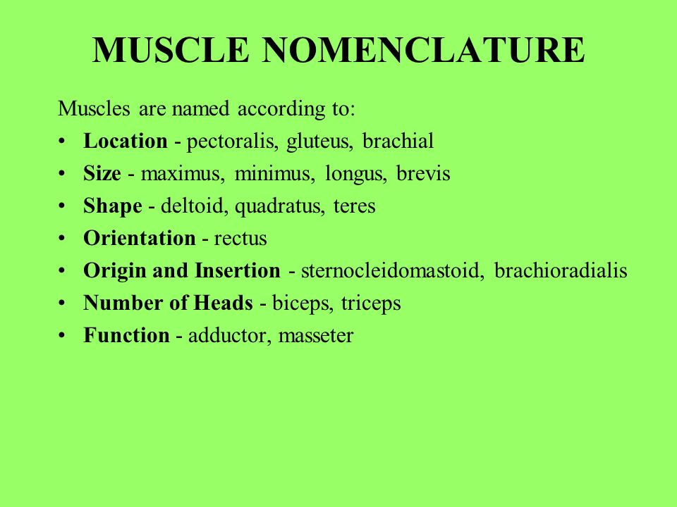 human anatomy lecture nine muscles. - ppt video online download, Muscles