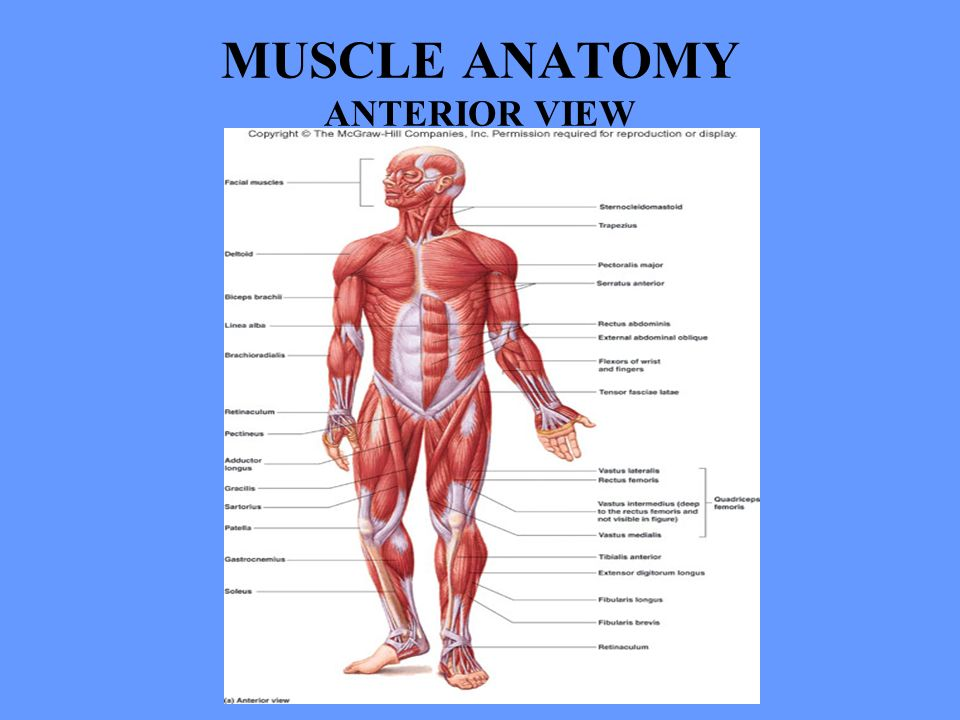 Anatomy lectures online