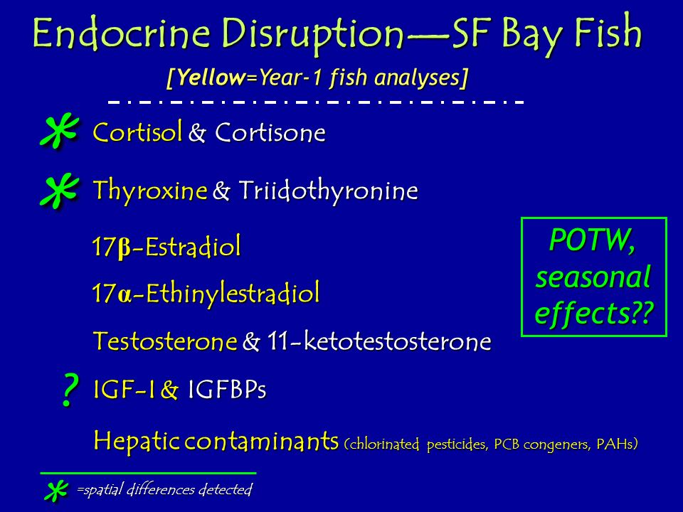 * * * Endocrine Disruption—SF Bay Fish POTW, seasonal effects