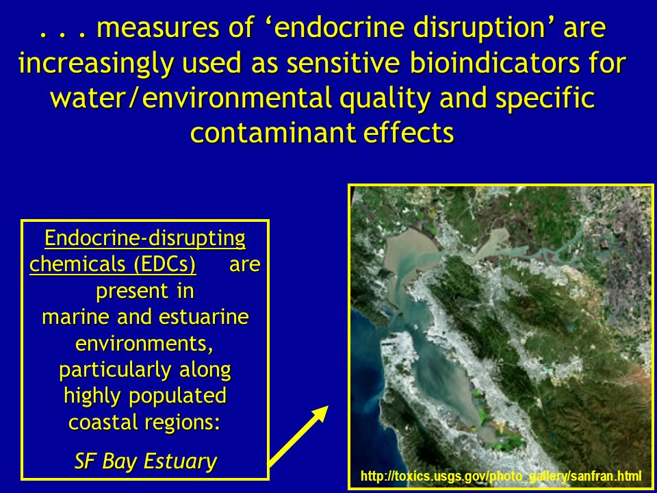 . . . measures of 'endocrine disruption' are increasingly used as sensitive bioindicators for water/environmental quality and specific contaminant effects