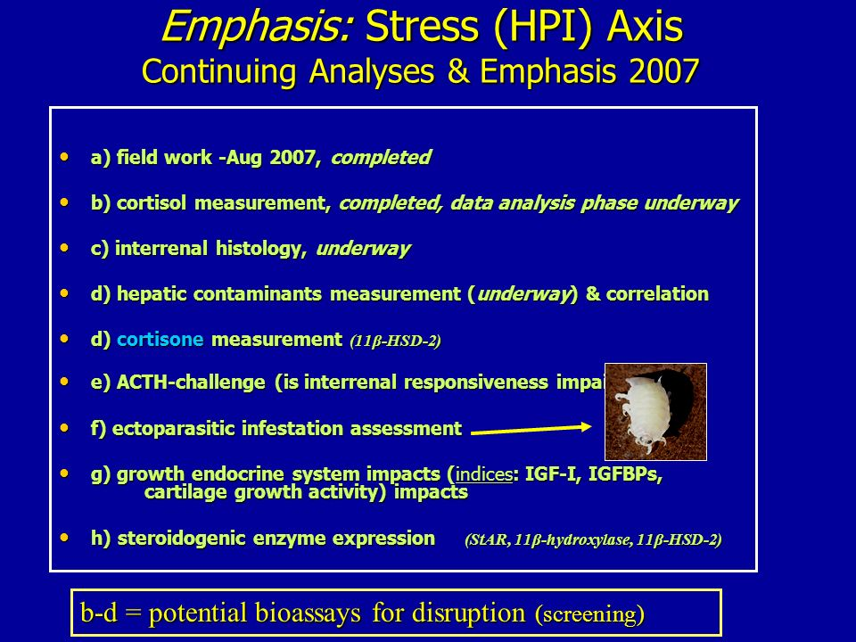 Emphasis: Stress (HPI) Axis Continuing Analyses & Emphasis 2007
