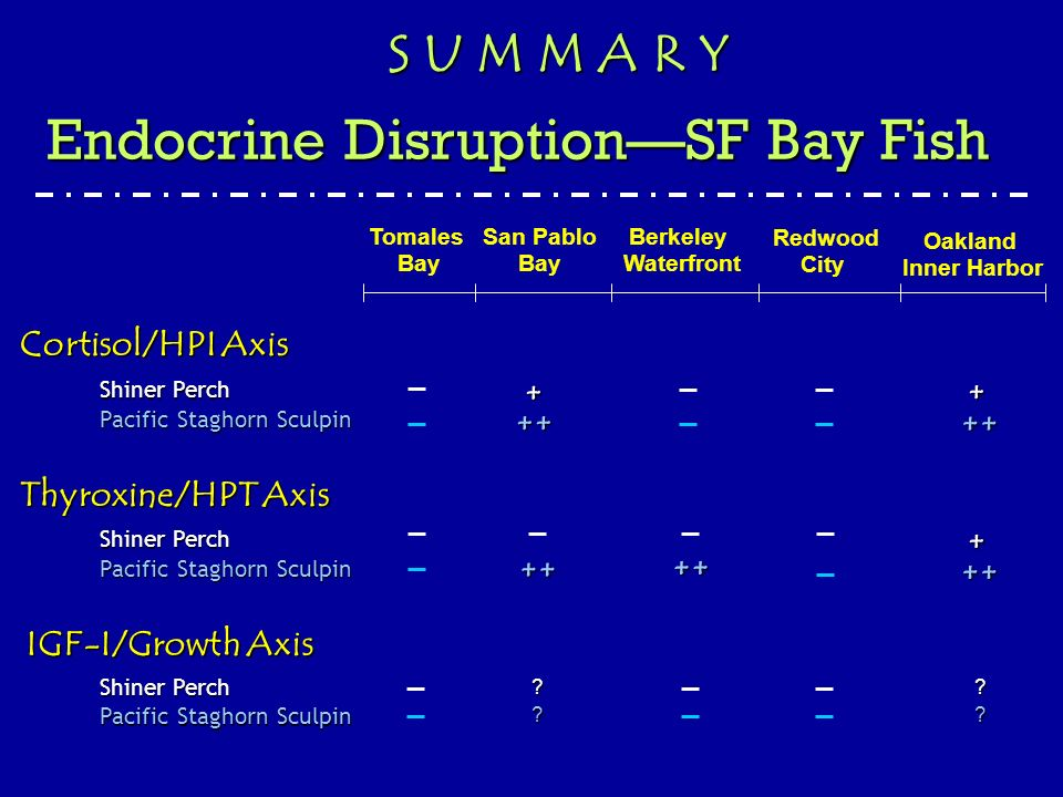 Endocrine Disruption—SF Bay Fish