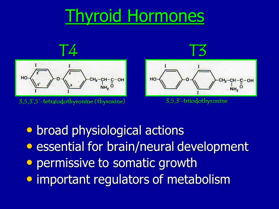 Thyroid Hormones T4 T3 broad physiological actions