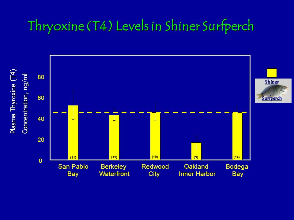 Thryoxine (T4) Levels in Shiner Surfperch