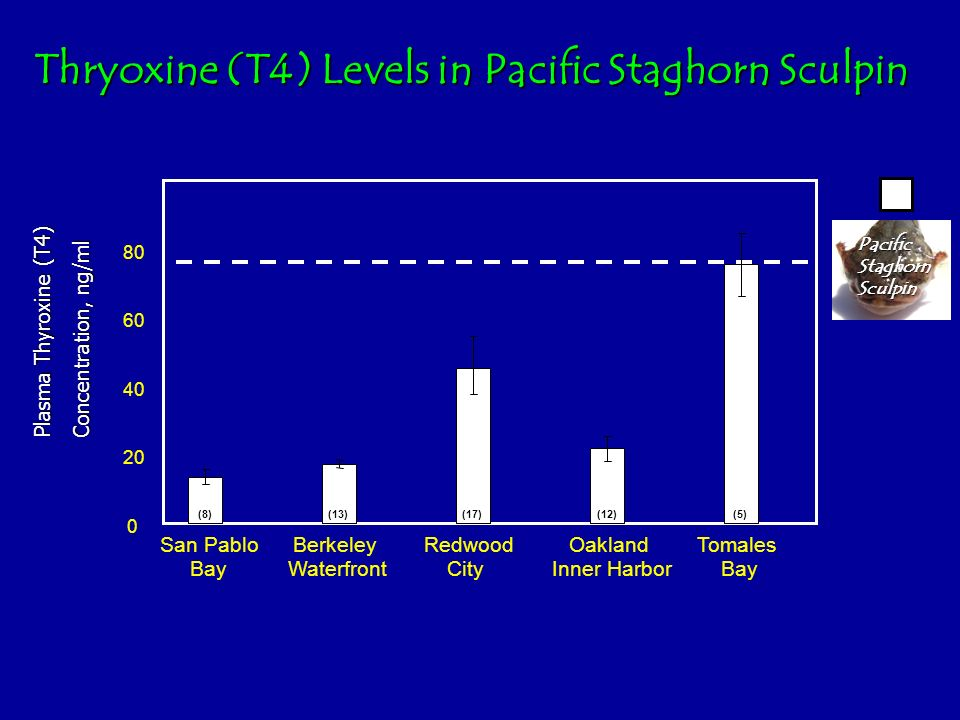 Thryoxine (T4) Levels in Pacific Staghorn Sculpin