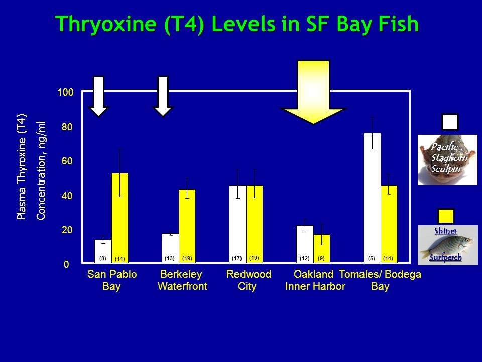 Thryoxine (T4) Levels in SF Bay Fish