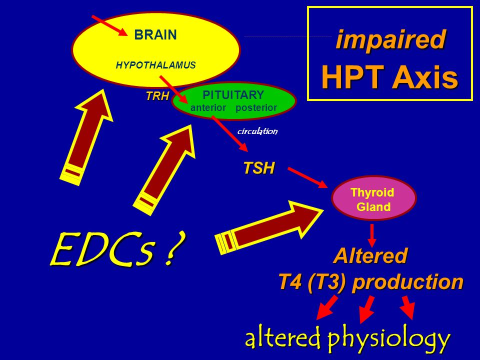 EDCs impaired HPT Axis altered physiology Altered T4 (T3) production