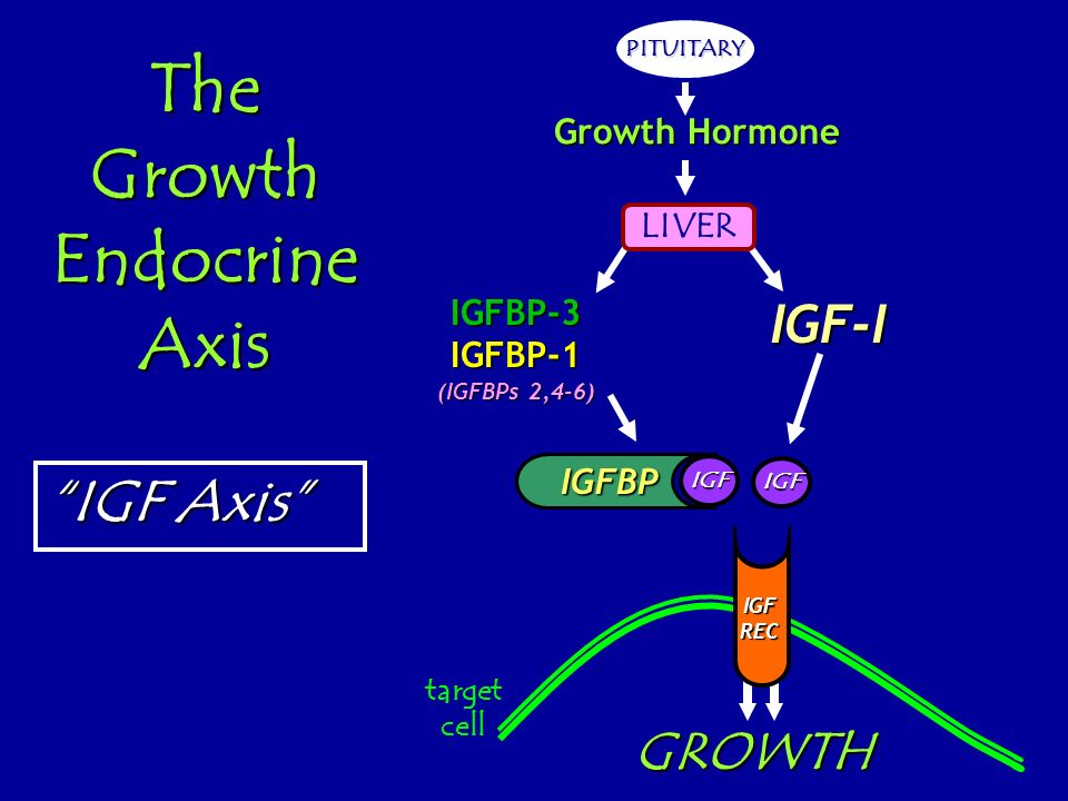 The Growth Endocrine Axis