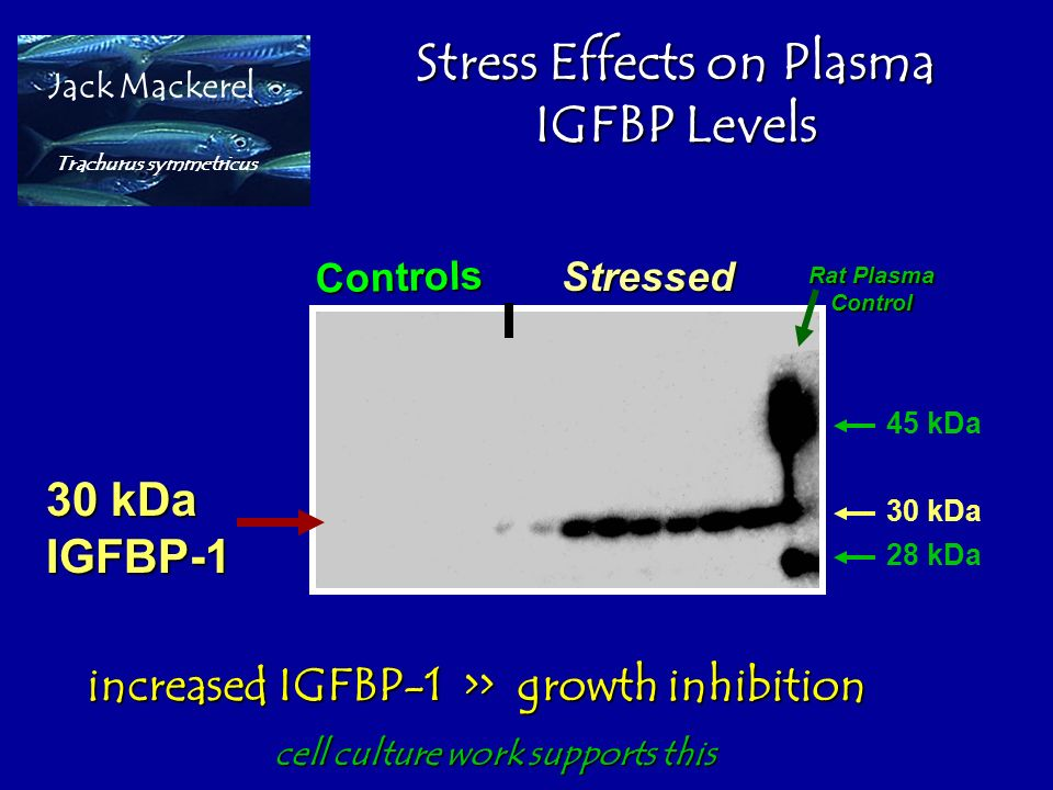 Stress Effects on Plasma IGFBP Levels