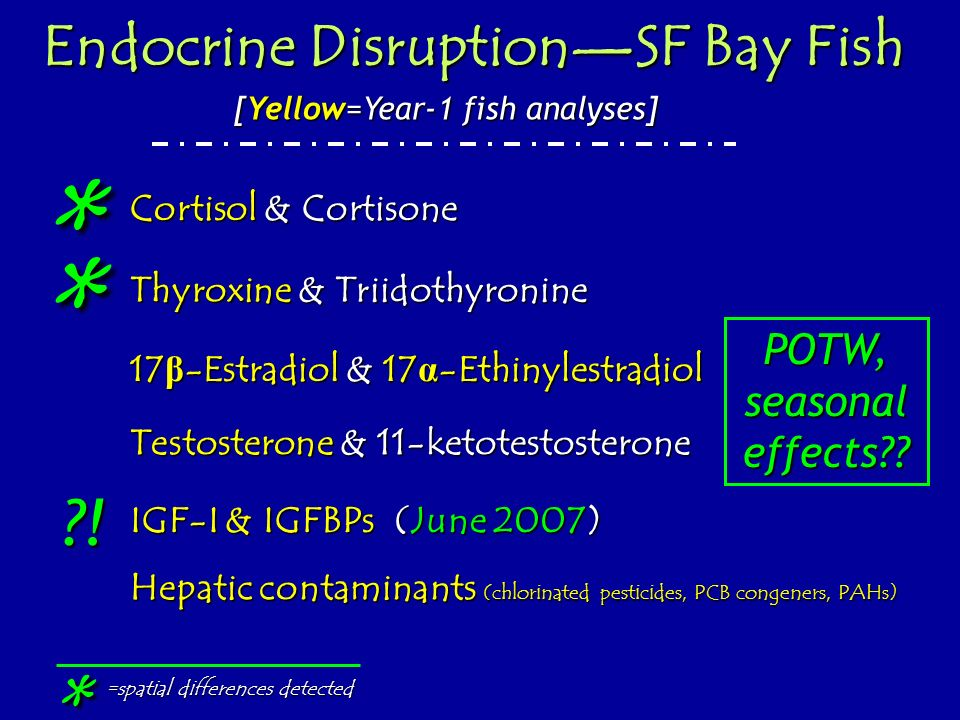 * * * ! Endocrine Disruption—SF Bay Fish POTW, seasonal effects