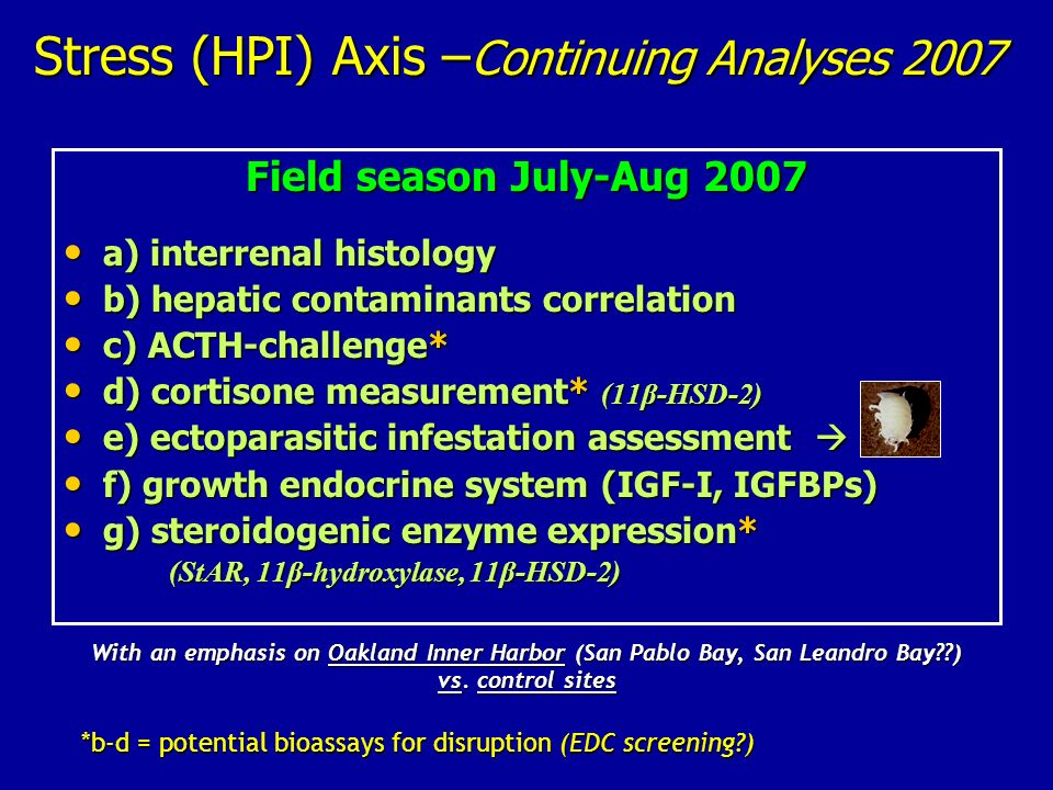 Stress (HPI) Axis –Continuing Analyses 2007