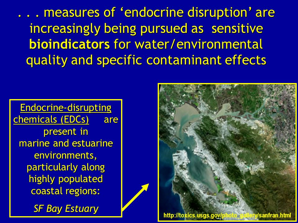 . . . measures of 'endocrine disruption' are increasingly being pursued as sensitive bioindicators for water/environmental quality and specific contaminant effects