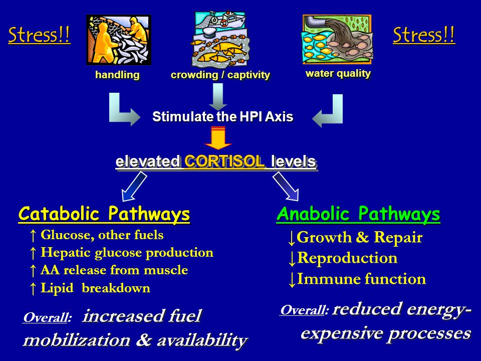 Stress!! Stress!! expensive processes Catabolic Pathways
