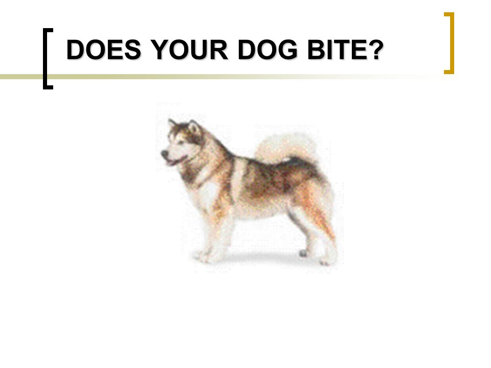 DOES YOUR DOG BITE