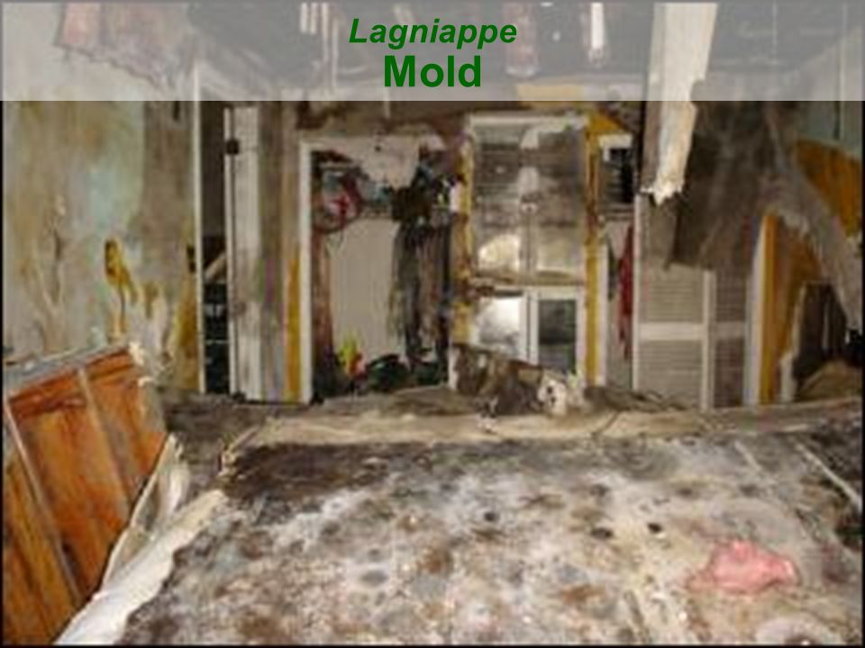 Lagniappe Mold
