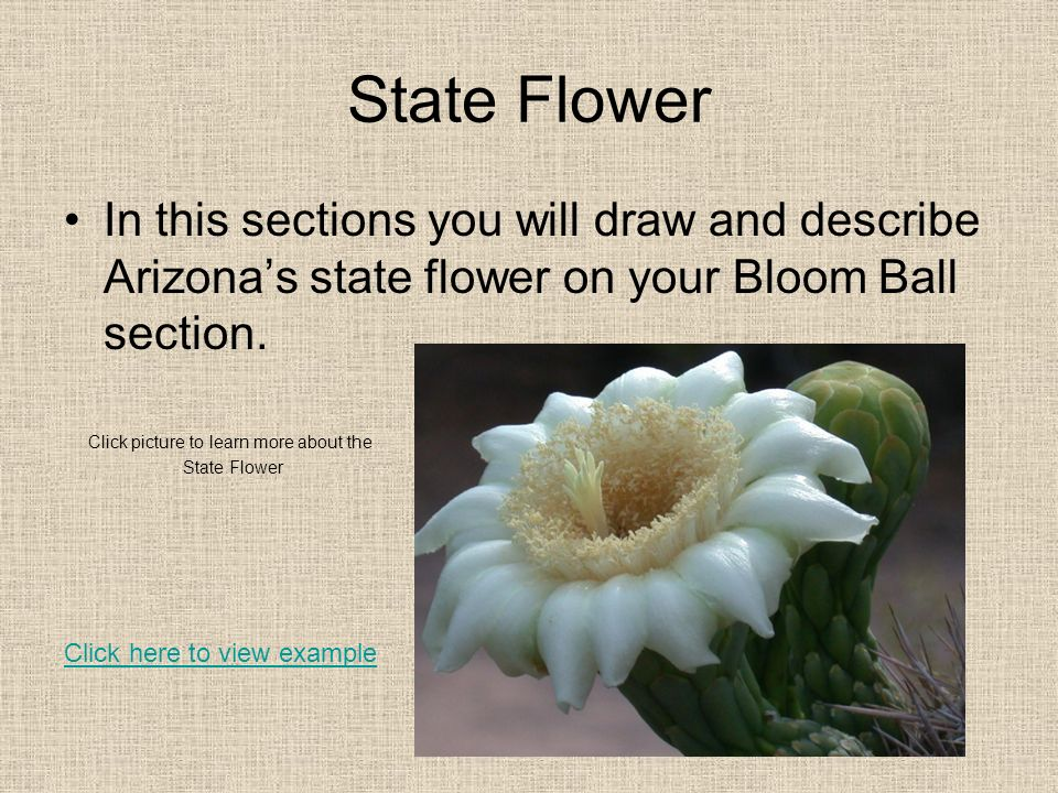 State Flower In this sections you will draw and describe Arizona's state flower on your Bloom Ball section.