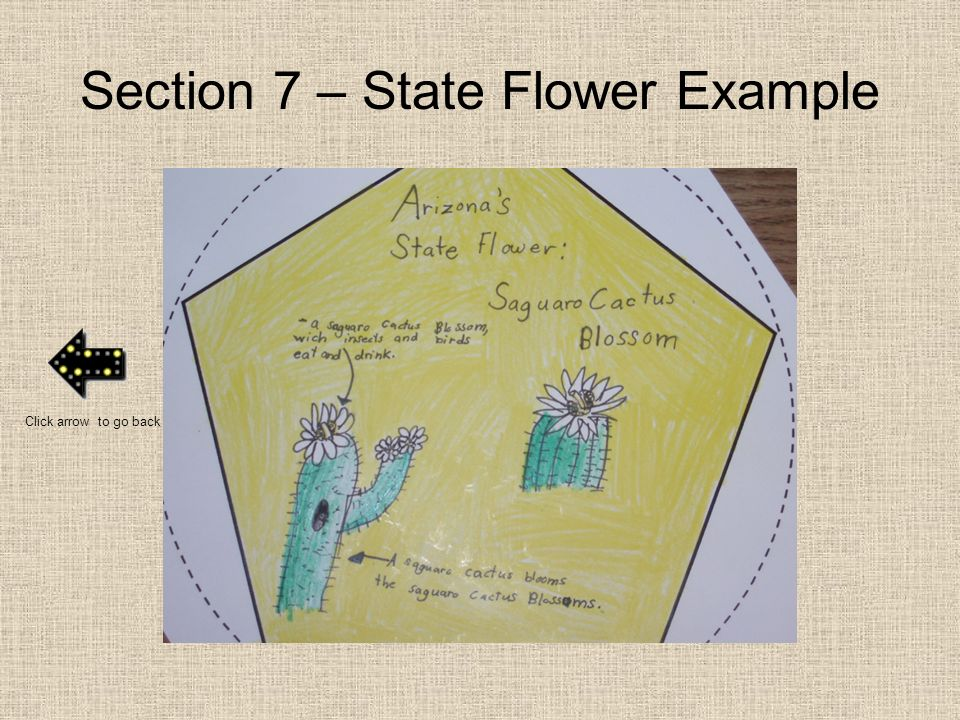 Section 7 – State Flower Example
