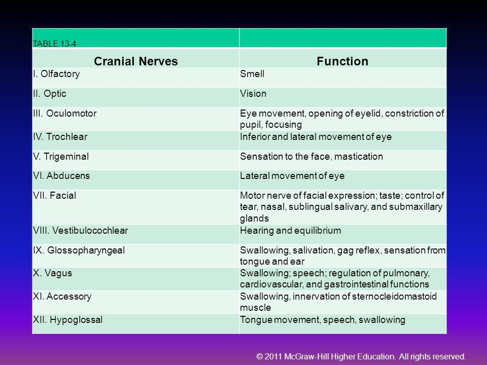 Cranial Nerves Function