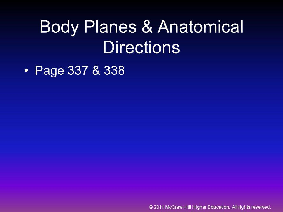 Body Planes & Anatomical Directions