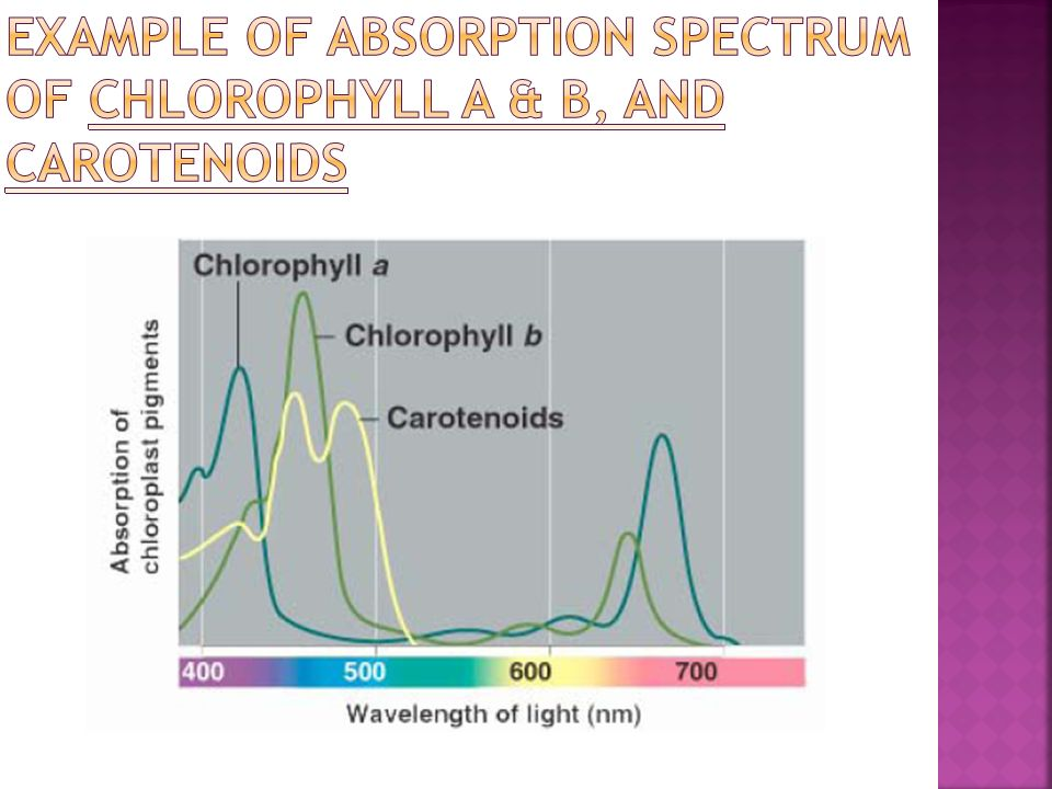Example of absorption spectrum of Chlorophyll a & b, and Carotenoids