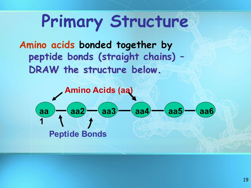 Primary Structure Amino acids bonded together by peptide bonds (straight chains) – DRAW the structure below.