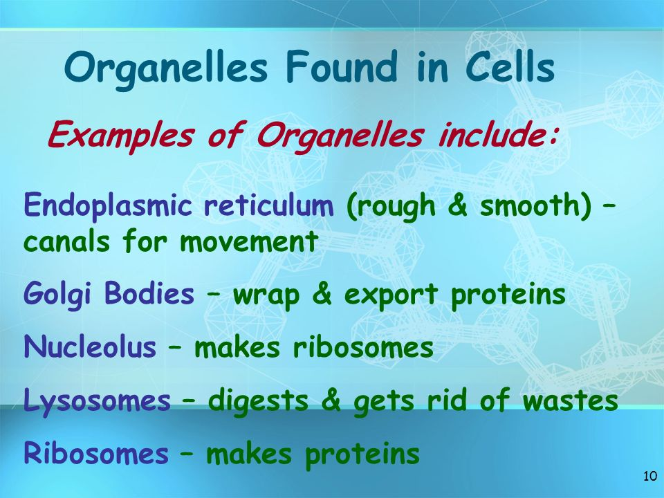 Organelles Found in Cells