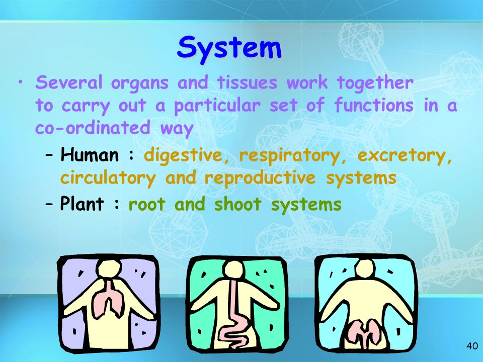 System Several organs and tissues work together to carry out a particular set of functions in a co-ordinated way.