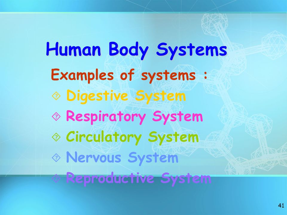 Human Body Systems Examples of systems : Digestive System