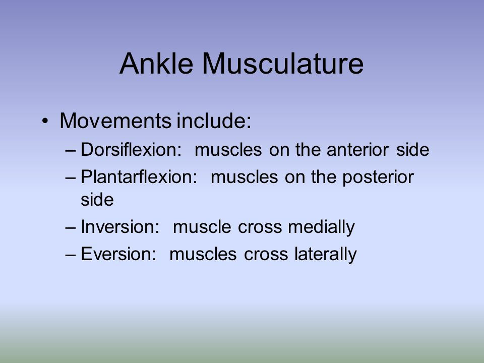 Ankle Musculature Movements include: