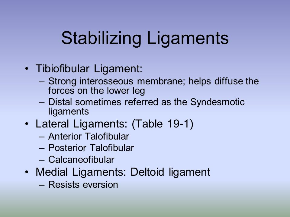 Stabilizing Ligaments