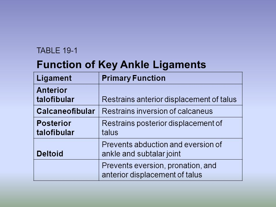 Function of Key Ankle Ligaments