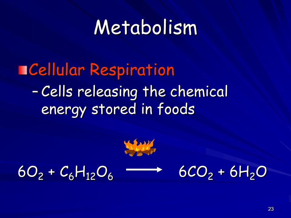 Metabolism Cellular Respiration