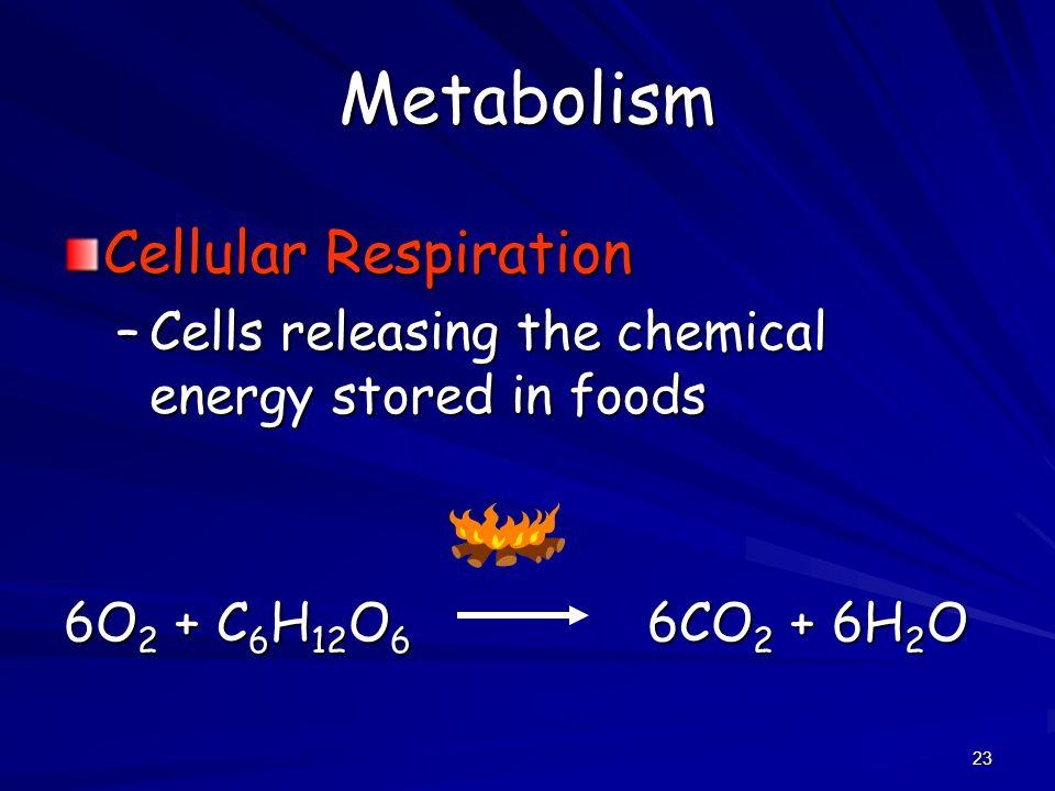 Metabolism Cellular Respiration