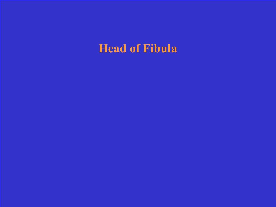 Head of Fibula
