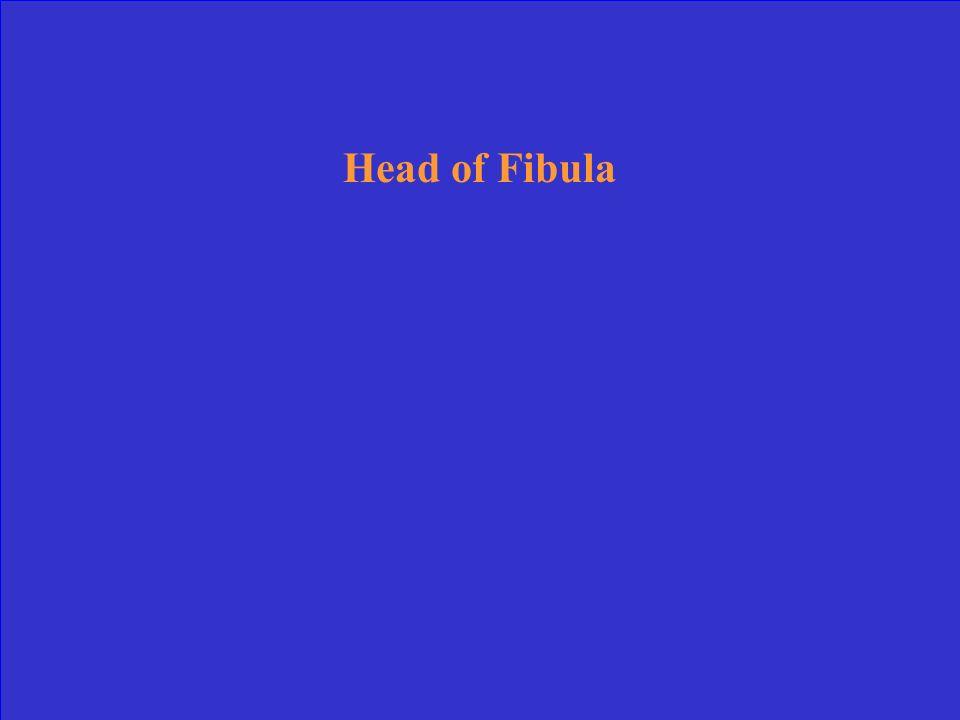 Head of Fibula