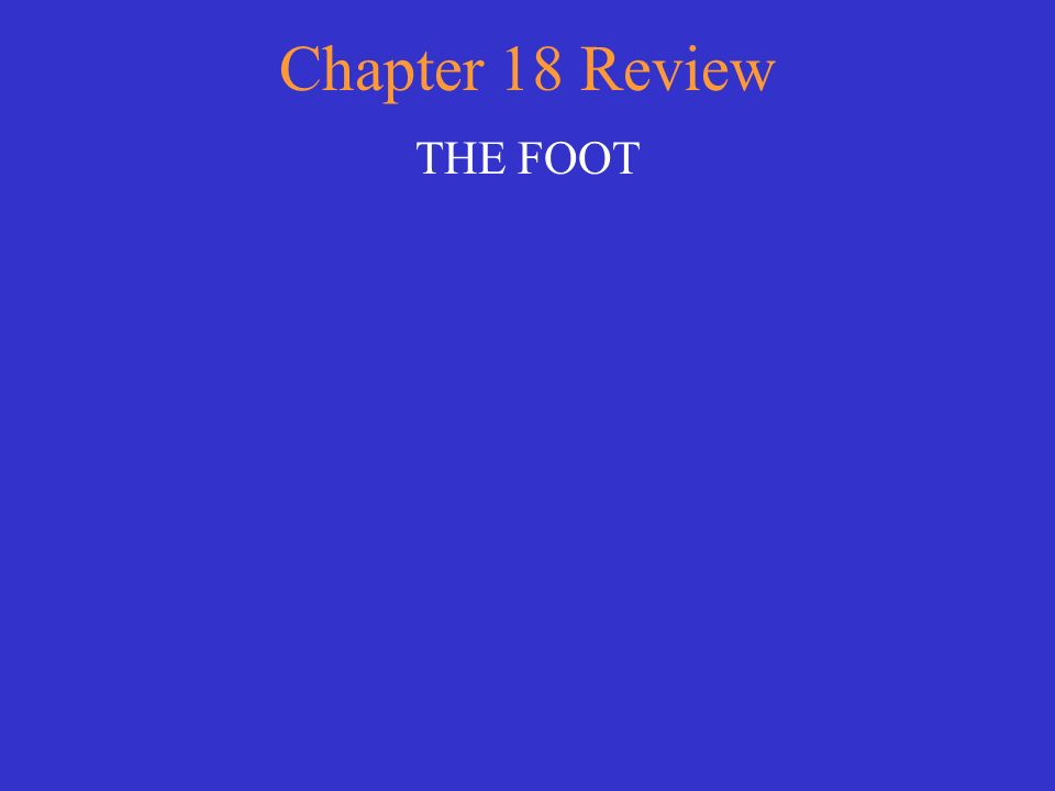 Chapter 18 Review THE FOOT