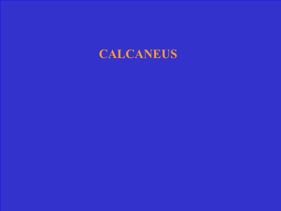 CALCANEUS