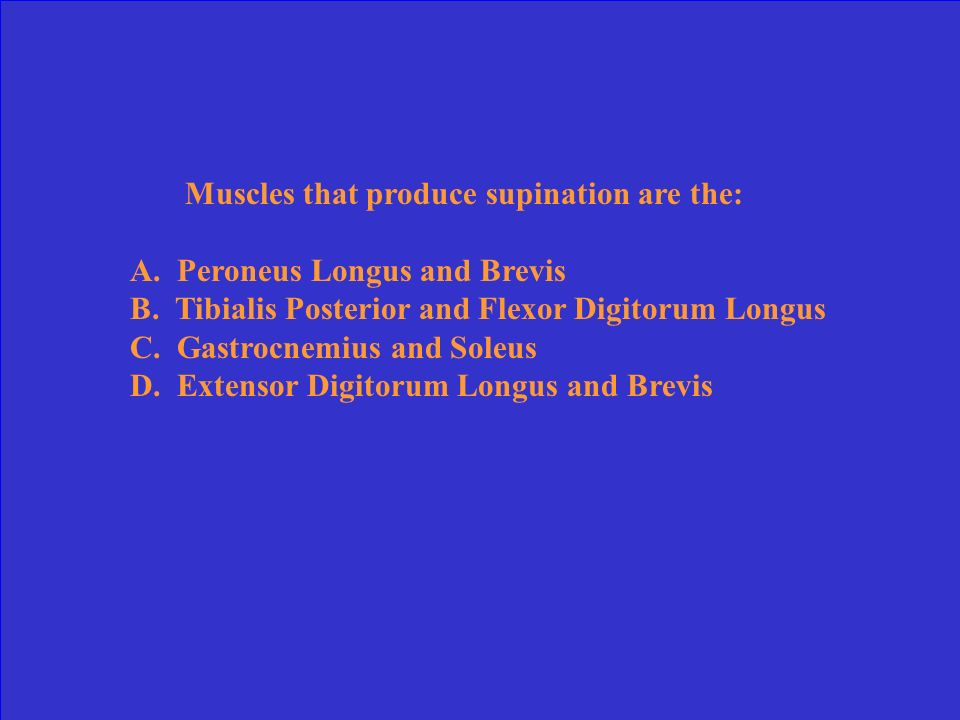 Muscles that produce supination are the: