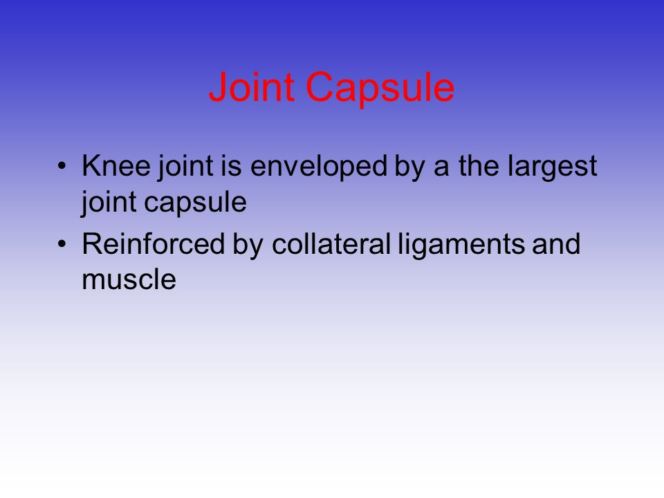 Joint Capsule Knee joint is enveloped by a the largest joint capsule
