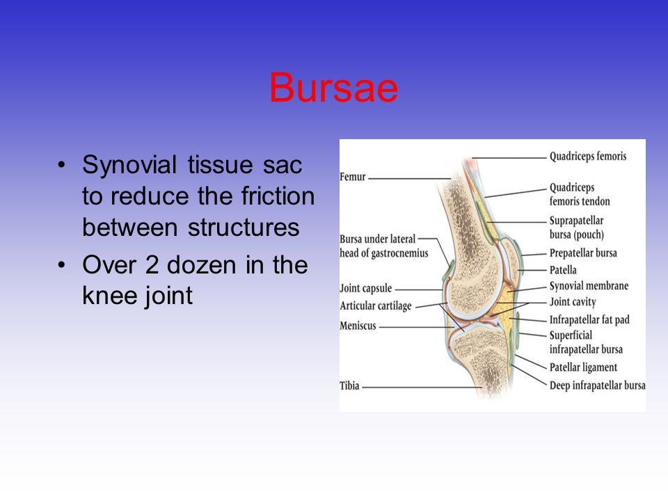 Bursae Synovial tissue sac to reduce the friction between structures