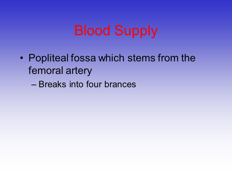 Blood Supply Popliteal fossa which stems from the femoral artery