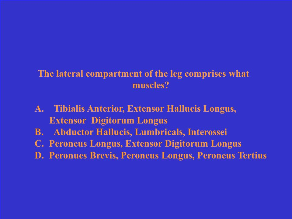 The lateral compartment of the leg comprises what muscles