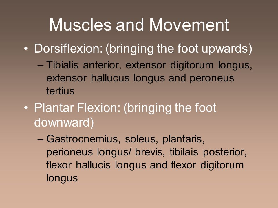 Muscles and Movement Dorsiflexion: (bringing the foot upwards)