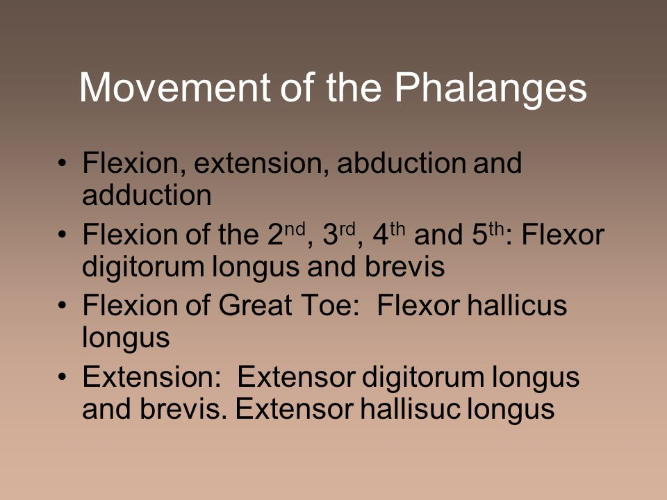 Movement of the Phalanges