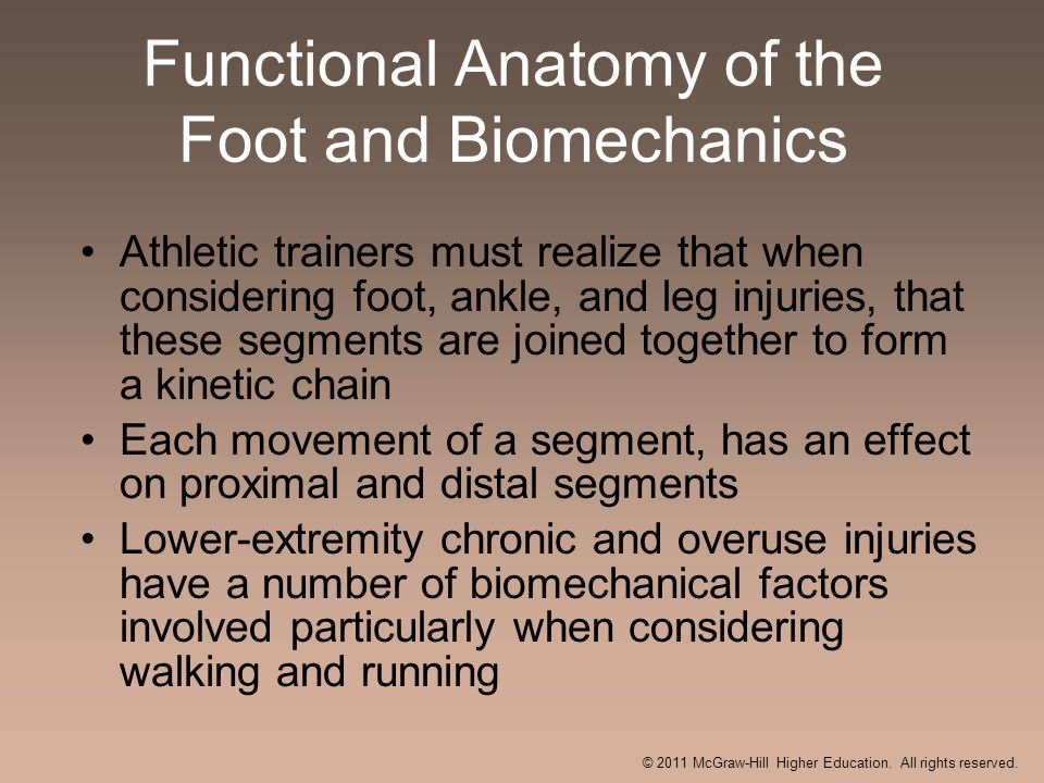 Functional Anatomy of the Foot and Biomechanics
