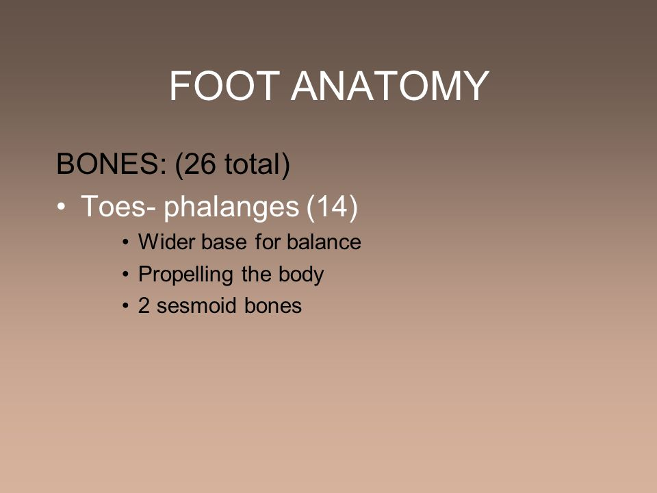 FOOT ANATOMY BONES: (26 total) Toes- phalanges (14)