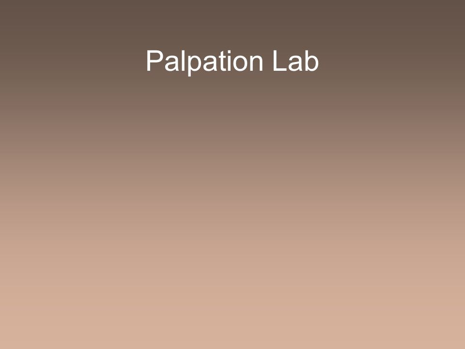 Palpation Lab