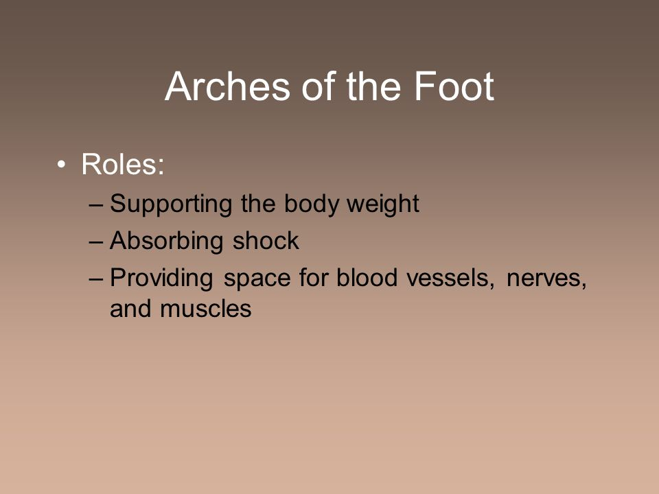 Arches of the Foot Roles: Supporting the body weight Absorbing shock